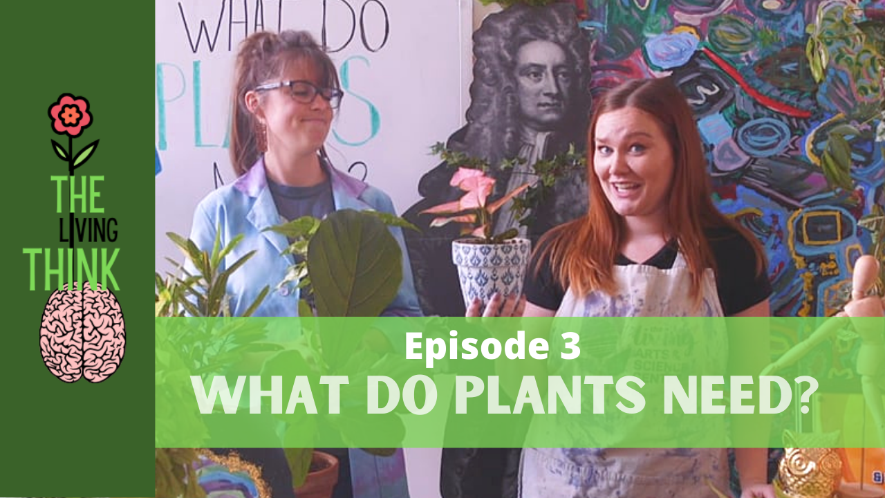 The Living Think: Episode 3 – What Do Plants Need